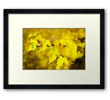 Little branch of maple with small yellow leaves closeup Framed Print