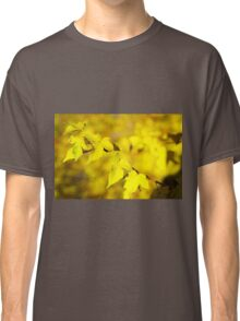 Little branch of maple with small yellow leaves closeup Classic T-Shirt