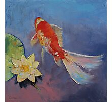 Koi on Blue and Mauve Photographic Print
