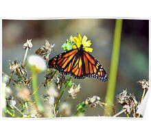 Butter fly flower Poster
