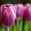 Springtime by Lynne Morris