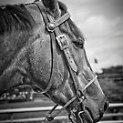 Bridle And Buckle by Eric Scott Birdwhistell