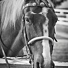 Equus Ferus Caballus by Eric Scott Birdwhistell