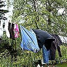 Dave's Washing by PPPhotoArt