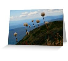 Mt Buller Buds Greeting Card
