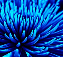 Do flowers feel blue? by Vicki Field