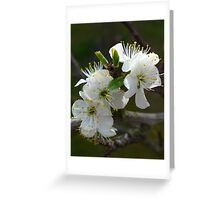 Sweet plum blossom Greeting Card