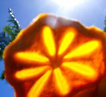 persimmon SLICE! by D. D.AMO