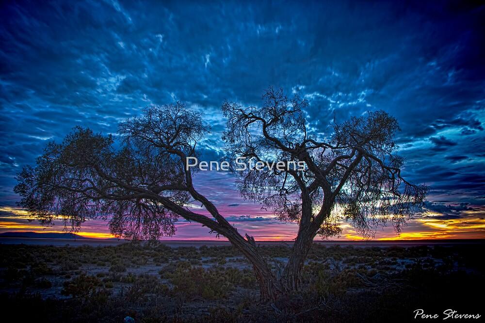 OutBack Dawn by Pene Stevens
