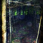 Dark Forest by PhilM031
