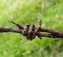 Rusty Barbed Wire by Sharon Brown