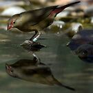 Reflection by SUMIT TANDON