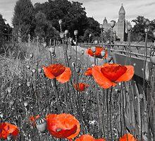 Poppies, Quarr Abbey by Zamzara