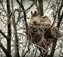 Allouez Owl by Erin LeFevre-Josephs