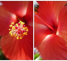Hibiscus Crush... by LindaR