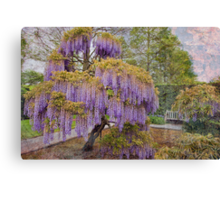 Wisteria Tree Canvas Print