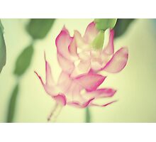 Christmas Cactus Photographic Print