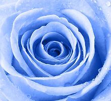 Blue Rose with Water Droplets by Natalie Kinnear