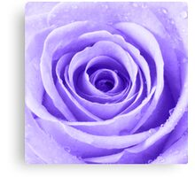 Purple Rose with Water Droplets Canvas Print