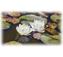 Waterlillies Photographic Print