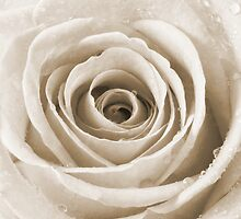 Sepia Rose with Water Droplets by Natalie Kinnear