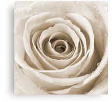 Sepia Rose with Water Droplets Canvas Print