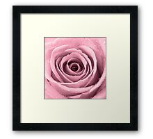 Plum Rose with Water Droplets Framed Print
