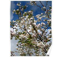 Cherry blossom sky series image 2 Poster