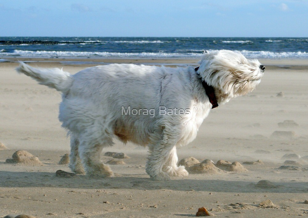 The Wind Will Blow ! by Morag Bates
