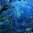 Mist IX by Ascender Photography