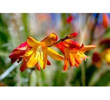 Fiery Flower Duo Photographic Print