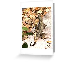They're back.... Greeting Card