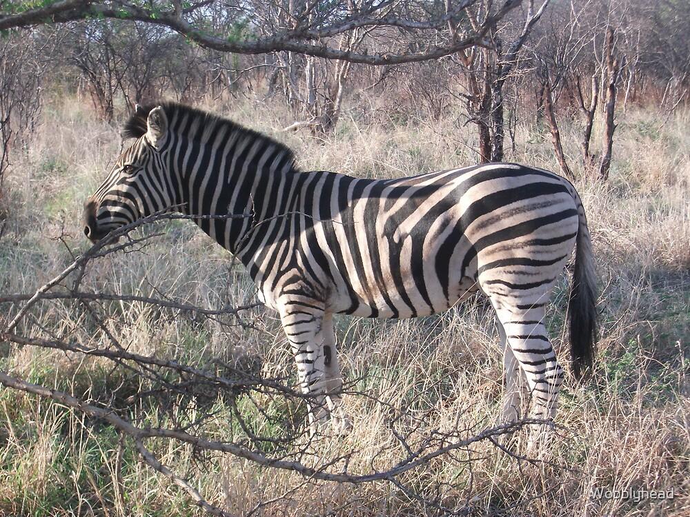 Zebra by Wobblyhead