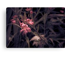 Ruby Tuesday Canvas Print