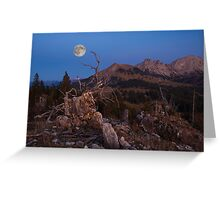 Mistress Of The Night Greeting Card