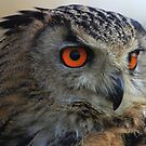 Eagle Owl (Bubo Bubo) by Hovis