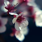 Plum Blossom by EkaterinaLa