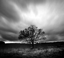 The Lone Tree by AlexGell