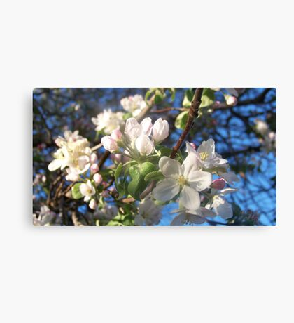 fruit tree glory Canvas Print