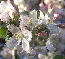 flower cluster by phreshphotos