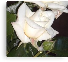 Early Summer Rose Canvas Print