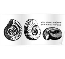 Math Spiral Shells Poster