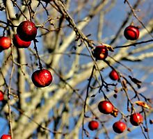 Nature's Seasonal Ornaments by Kathleen Daley