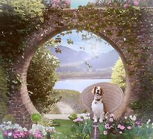 Welshie (Welsh Springer Spaniel) enjoying the garden by KibblyWibbly
