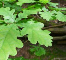 Oak leaves at Newmillerdam Sticker