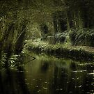 Cromford Canal by Greg Webb