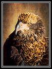 Fine Feathered Friend by KBritt