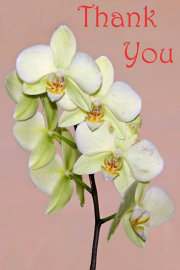 Orchid Thank You Card by cclaude