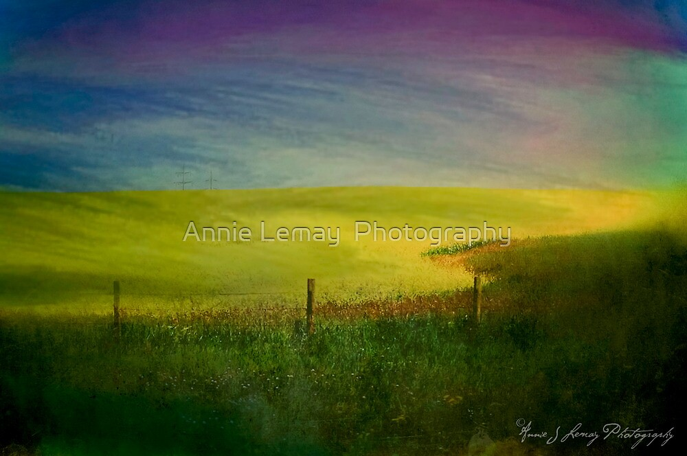 Canola Dreams by Annie Lemay  Photography