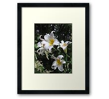 Lilies and Lace Framed Print